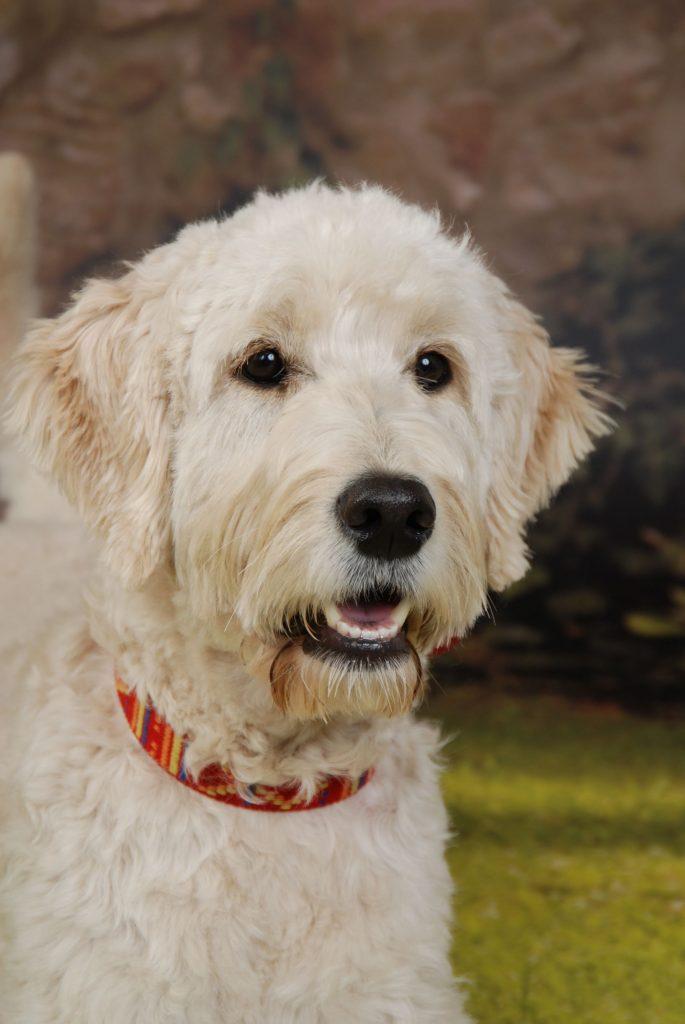 tiergestützte Logotherapie mit Polly dem Therapiehund